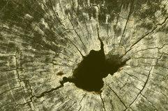 árbol-de-hueco-35038628