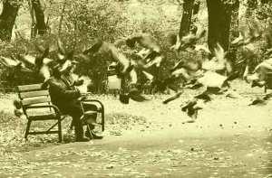 man-feeding-birds