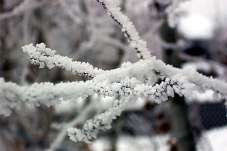frost_108