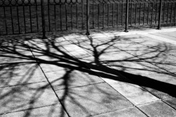 shadow_of_a_tree
