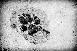 footprint-962170__180