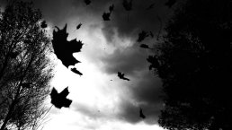 falling_leaves_by_rangereclipse-d4d973b