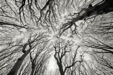 Fractal-Trees