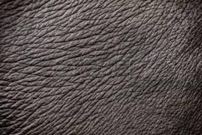 62449712-piel-del-elefante-textura-de-fondo-abstracto