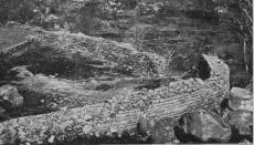 Ruins-of-Khami