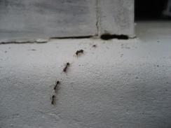 prevent-ants