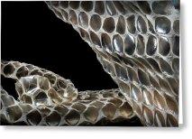 shedded-snake-skin-robert-storost