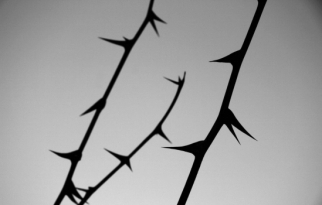 winter_thorns