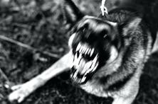 dog-barking-in-apartment-barking-dog-apartment-dog-barking-apartment-reddit