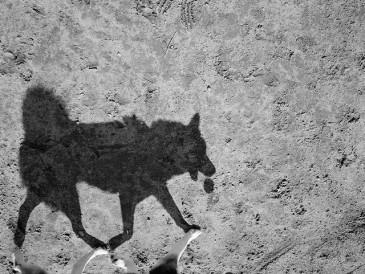 dogshadow5-640x481