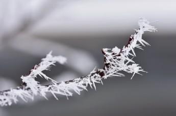escarcha-ramas-hermoso-fondo-natural-estacional-invierno_1161-500
