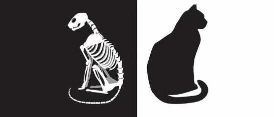 Schrödinger-Cat